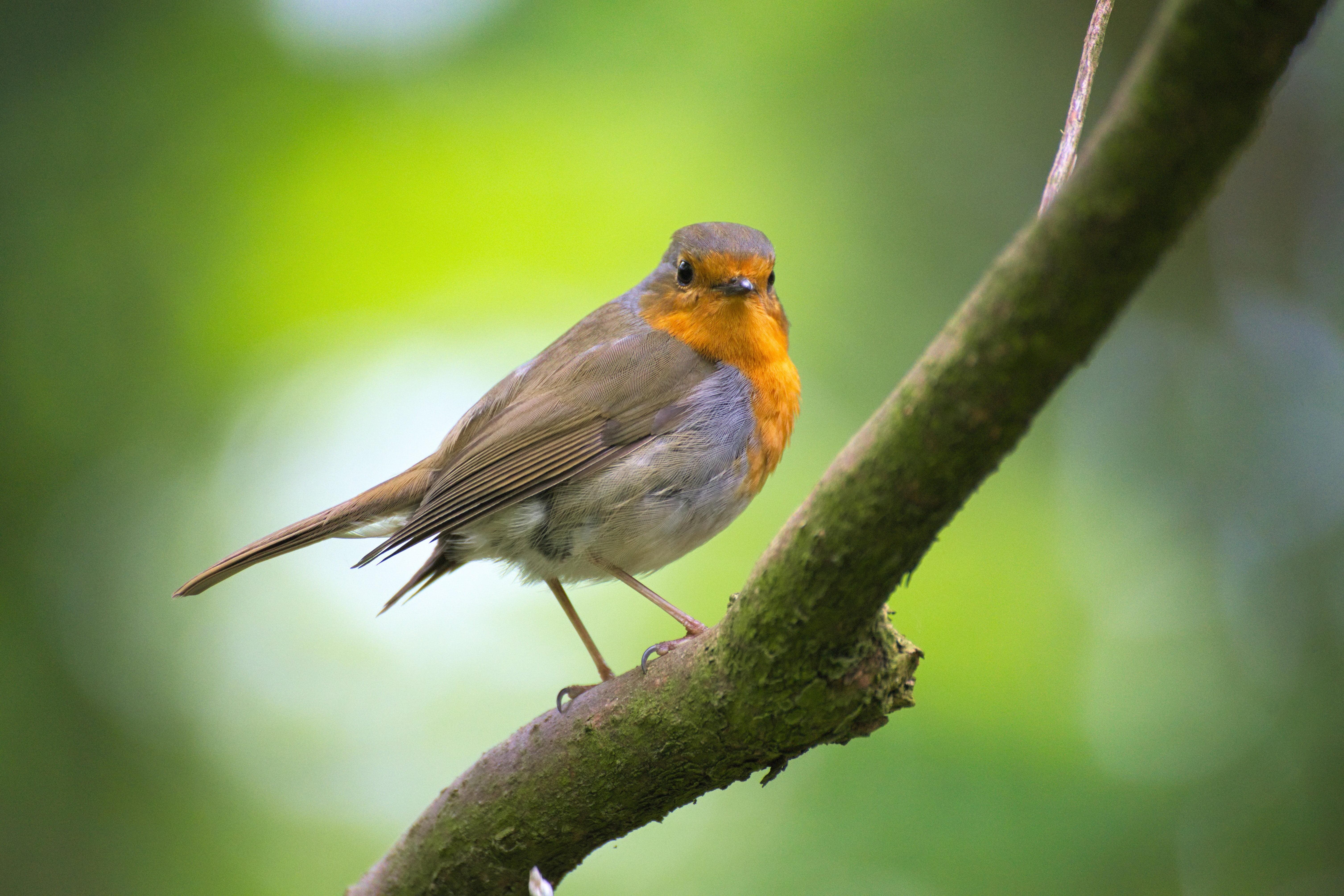 Spring birdsong