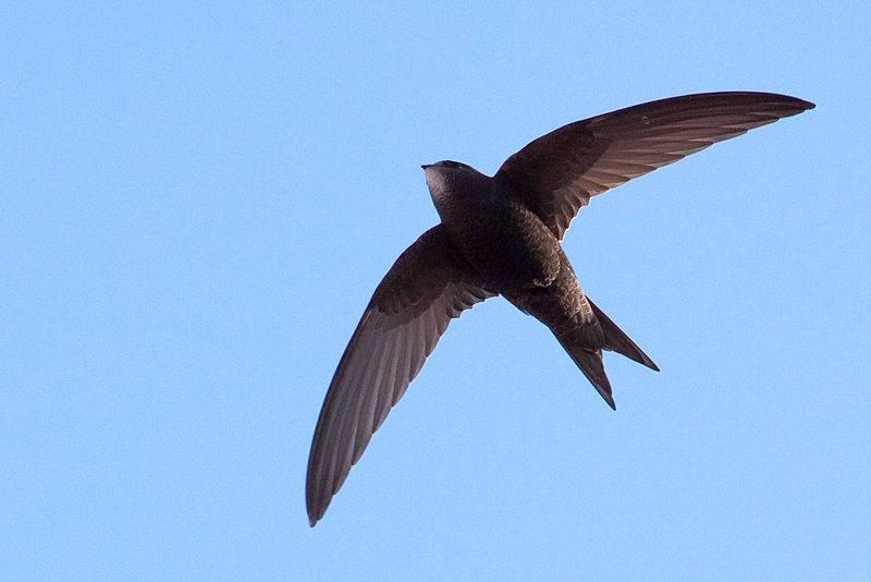 Goodbye swifts!
