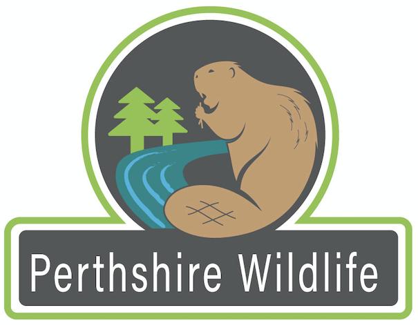 Perthshire Wildlife
