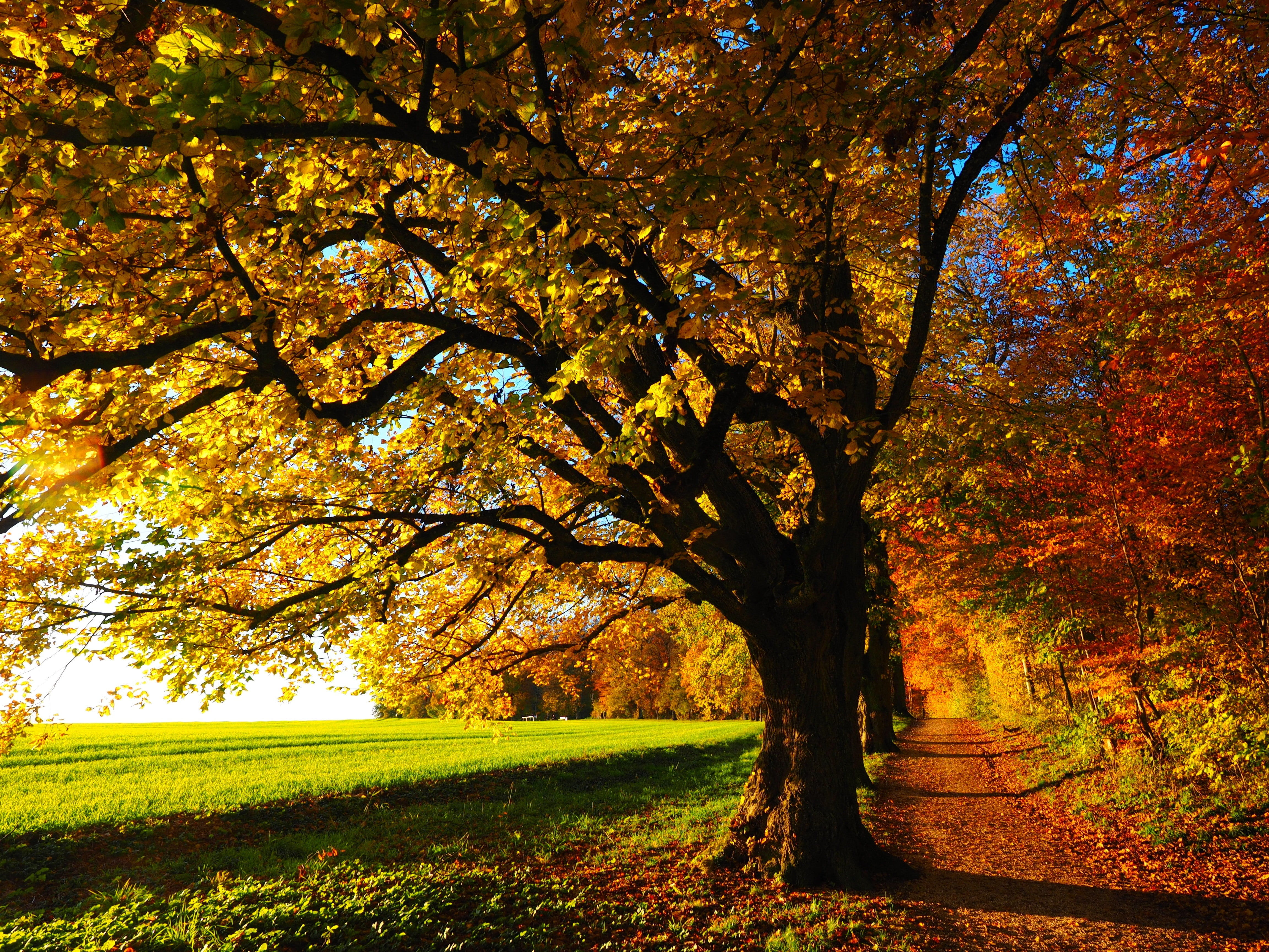 Tall Trees & Local Wildlife