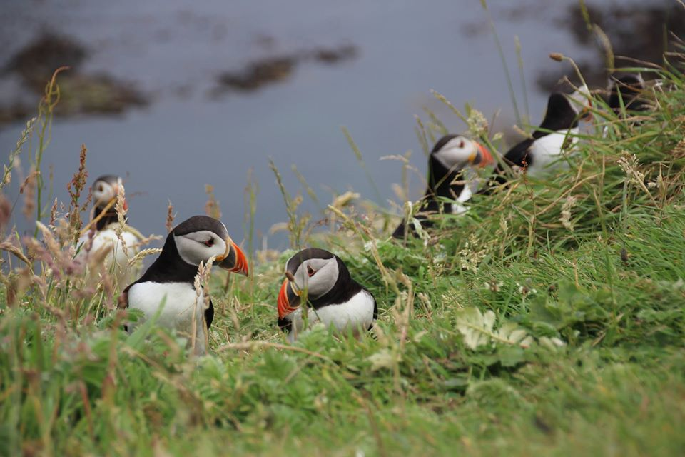 Angus Coastal Tours – join us for beaches, seabirds, dolphins & wildflowers!