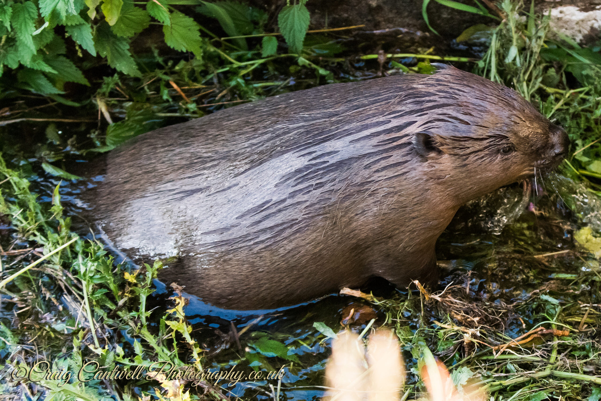 We're good to go – Beaver tours start this weekend!