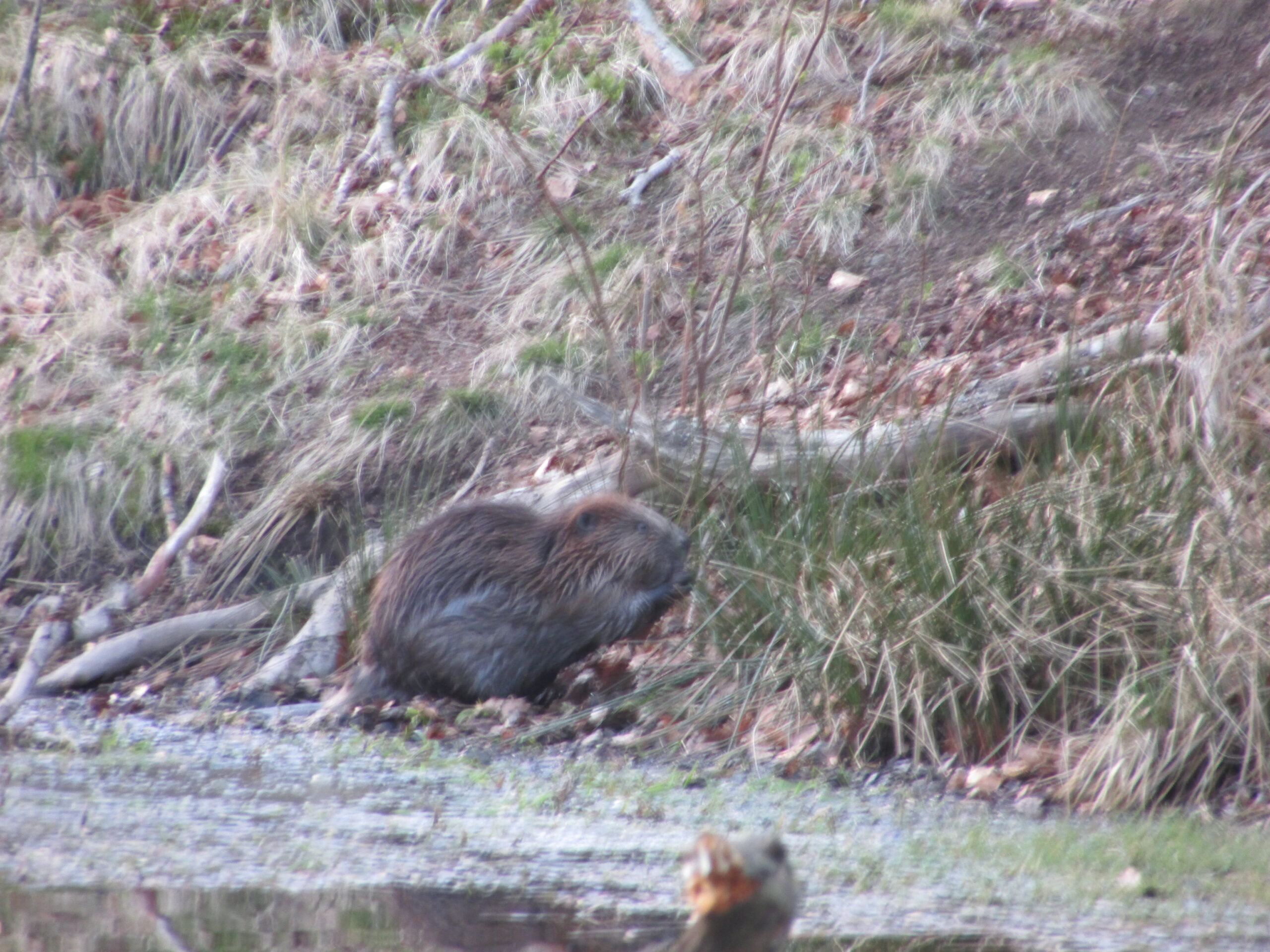 Brilliant to see our Beaver pals again!
